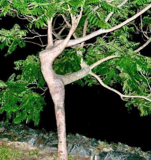 Trees We Do Not Like