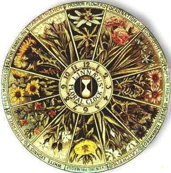 The Linneaus Flower Clock
