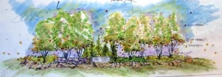 Color rendering for landscape