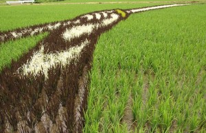 Rice Art_the close-up