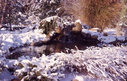 LCN pond1 in winter