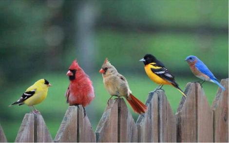AngryBirds 01_reallife