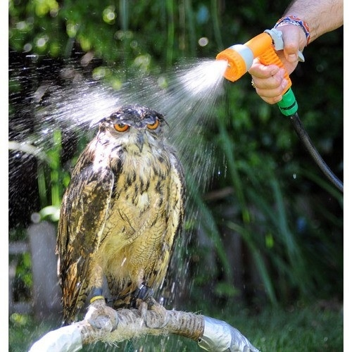 --- Bath Time ---