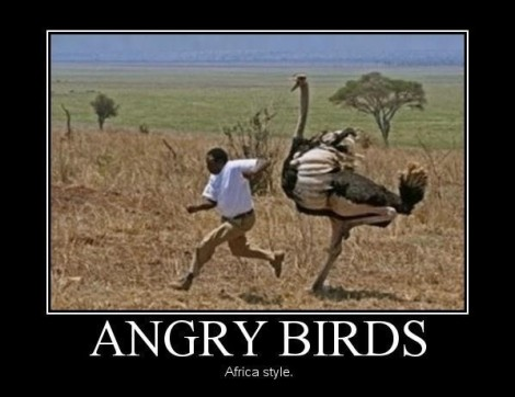 AngryBirds 03_AfricaStyle