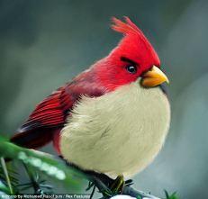 angrybirds 05_cardinal