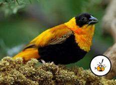Angrybirds 06_mexicogeek