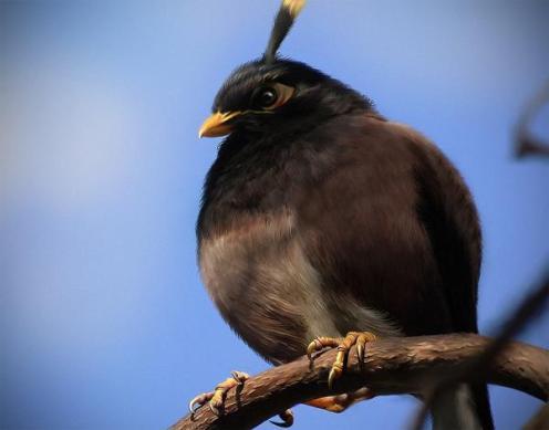 angrybirds 07_bomber