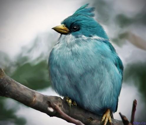 angrybirds 08_glassbreaker