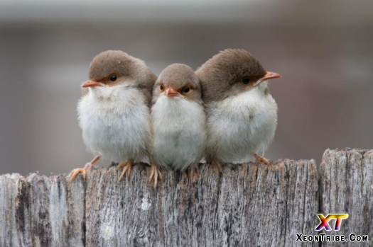 --- 3 on the Fence ---