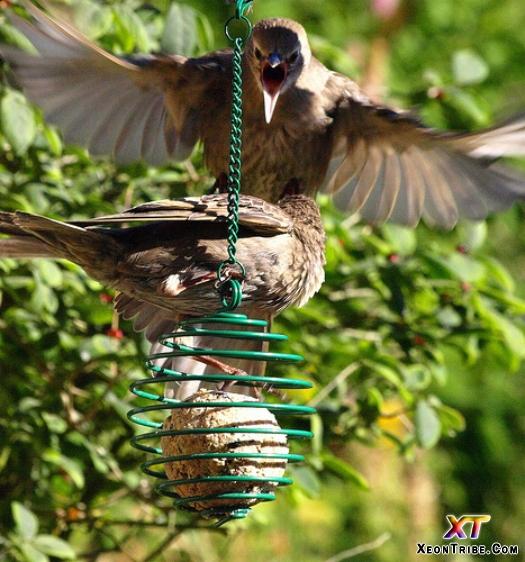 angrybirds 16
