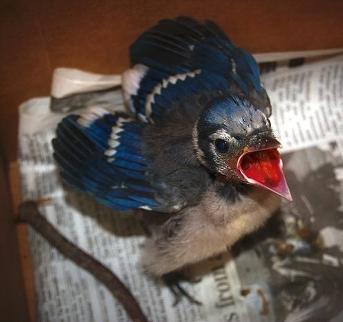 angrybirds 18_