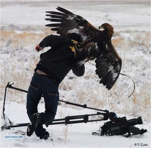 eagleattack_photographer_via_