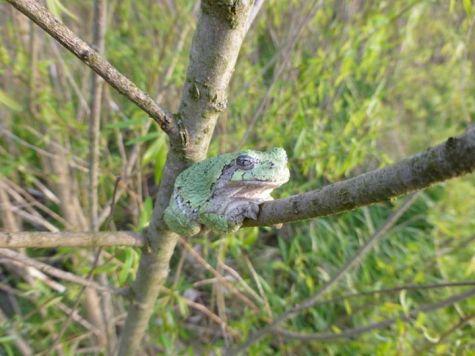 NJC 06_frog