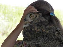 NJC 07_owl