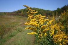 NJC 10_wildflower
