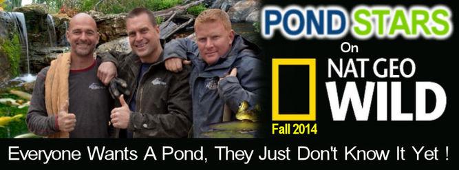 Aquascapes goes Pond Stars