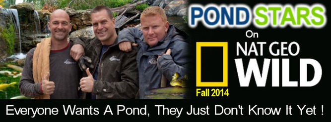 Aquascapes goes Pond Stars