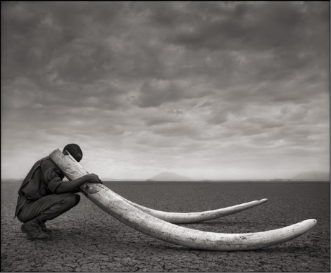 Bloody Ivory An unsustainable four elephants are...